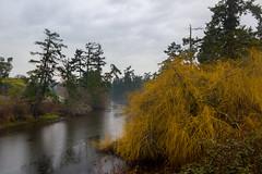 inlet (kevin.boyd) Tags: park orange tree rain day bc gloomy view royal victoria rainy inlet gorge gloom waterway saanich