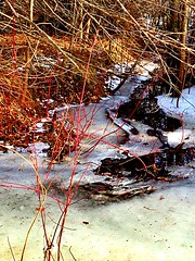 Ice is melting (CCphotoworks) Tags: winter snow february meltingsnow winterscene dogwoodbranches
