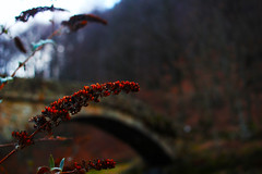 Red (M. Drago) Tags: bridge trees red italy flower tree nature water grass lens stream flickr cloudy adventure 24mm