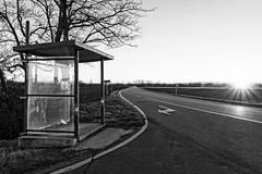 Does this bus stop at 82nd street? (Luca Quadrio) Tags: road travel trees winter sunset blackandwhite italy sun bus cars monochrome italia shadows it busstop lombardia desolation gravellonalomellina