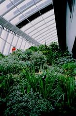 Skygarden (Eveans Mellonie) Tags: uk england london film 35mm person flora greenhouse plans weekendtrip nikonfe skygarden kodakfilm ektar ilovefilm filmisnotdead colourfilm nikkor24mmf28 ektar100