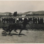 Crowd watches harness racing thumbnail