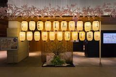 "Paper Lanterns (Herve ""Setaou"" BRY) Tags: light japan tokyo lumire jp shrub japon paperlantern lampion haneda chineselantern hanedaairport aroport chibaken vgtaux arbuste taku aroporthaneda"