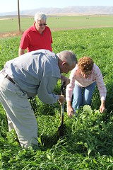 Healthy Soil Maximizes Moisture, Boosts Profits for Oregon Farmer