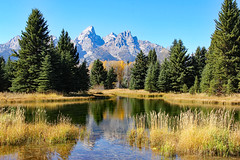 Fall Reflections At Schwabacher's Landing (Robert F. Carter Travels) Tags: autumn mountain mountains reflection fall reflections landscape nationalpark weeds fallcolors autumncolors wetlands grandtetons nationalparks grandteton wetland mountainscape grandtetonnationalpark thetetons