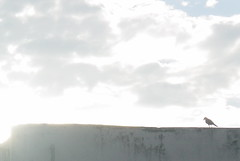 Day 60, Solitary bird. (Abbottabad, Pakistan) (Somersaulting Giraffe) Tags: pakistan bird clouds solitude bright outdoor abbottabad