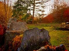 DSC06576 (stevenscoullar) Tags: tree nature wales forest garden countryside woods flickr natural country llangollen