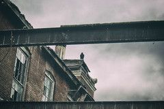 The Watcher (Off The Beaten Path Photography) Tags: bird abandoned birds digital canon dark sinister indiana creepy madison crow dslr crowe crows abandonment eery watcher canon60d abandonedindiana abandonedamerica