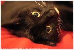 * (Dit is Suzanne) Tags: img4834 16022016 zwartwittekat blackandwhitecat чернобелыйкот ©ditissuzanne canoneos40d canonef50mmf14usm kat kater кот cat vasya вася kotvasya котвася oog eye глаз beschikbaarlicht availablelight brompotje views100