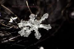 IMG_8879 (nitinpatel2) Tags: macro snowflakes patel nitin