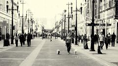 Walking The Dogs (Sherlock77 (James)) Tags: people woman dog calgary downtown streetphotography stephenavenue