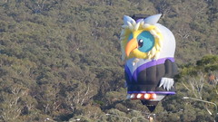Looking for a spot to land bear the Botanic Gardens (spelio) Tags: water festival mar hotair balloon australia canberra act 2016 lakeburleygriffin