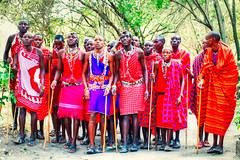 Masai men performing the warriors' dance, Masai Mara, Kenya (CamelKW) Tags: kenya safari masaimara 2015 masimara masaimen nikond800 warriorsdance