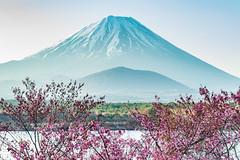 (shinichiro*) Tags: flower daylight spring fuji jp april  sakura cherryblossoms crazyshin 2016    lakeshoji  afsnikkor2470mmf28ged nokpnd4s 20160415ds30423
