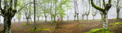 Hayedo de Urkiola (Jabi Artaraz) Tags: musgo primavera nature natura zb frío niebla hayas panorámica urkiola hayedo goroldioa pagoak euskoflickr jabiartaraz jartaraz pagadiak