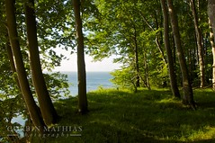 Rgen Forest at Dawn (cdmathias) Tags: park morning blue trees light tree green nature forest sunrise germany landscape deutschland dawn coast outdoor natur cliffs shore serene ruegen jasmund schon rugen