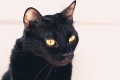 Snake eyes (_Sylvian) Tags: pet cats cute animal animals cat eyes feline adorable indoor kitties mamal