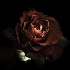 photo (shoji.k) Tags: flowers lightandshadow ros takingphotos checkthisout snapshotsoflife iphoneography