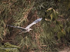 Bird Flying (David Cucalón) Tags: naturaleza david bird nature animal flying pajaro volando cucalon davidcucalon