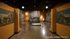 The Yelda Khorsabad Court Gallery (Armin Hage) Tags: chicago museum illinois iraq oriental universityofchicago babylon orientalinstitute mesopotamia lamassu assyrian khorsabad dursharrukin kingsargonii theorientalinstituteoftheuniversityofchicago