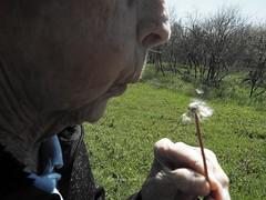 Make a Wish (Tricia H C) Tags: woman plant dandelion makeawish elderlywoman seniorcitizen
