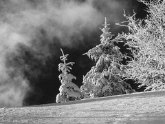 Abeti di zucchero (daniloinnocenti) Tags: snow tuscany abetone