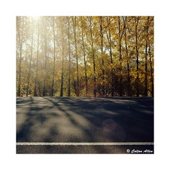 Sunlight and Poplars (Daiku_San) Tags: 120 6x6 film ishootfilm usetheforce colorfilm ashlandoregon wlf kodakektar100 zenzabronicas2 epsonv500 superkomura4545