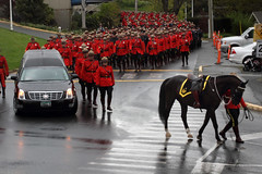 RCMP Full Regimental Funeral (professional recreationalist) Tags: red horse car sarah march crash walk funeral becket killed rcmp procession brucedean professionalrecreationalist crowds speeding hearse victoriabc mourn serge cst regiment colwood riderless regimental redserge sarahbecket