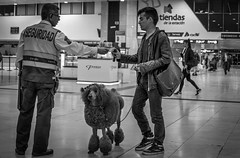 Dog passport security control (sergiguisa) Tags: bw streetphotography trainstation passport doghair renfe peluqueriacanina santsestacibarcelona