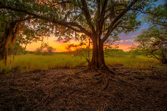 Sunset beyond the tree (MichaelSOwens) Tags: park sunset tree river moss oak state florida explore spanish hdr myakka