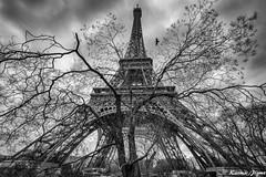 Roots and wings (karmajigme) Tags: travel trees blackandwhite paris france tower monument monochrome nikon noiretblanc eiffeltower toureiffel