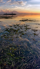 Seaweed (Hafiz.Soyuz.Photography) Tags: ocean sea bali mountain seaweed green beach silhouette sunrise golden landscapes high seascapes tide low landmark hours shack sanur karang