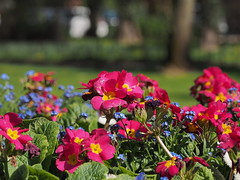 mozirski-gaj_02 (carlo) Tags: flowers olympus slovenia slovenija fiore botanicalgarden omd em1 ortobotanico giardinobotanico mozirje mozirskigaj