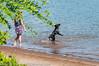 _DSC5224.jpg (orig_lowolf) Tags: people usa dog oregon nikon flickr lakeoswego georgerogerspark d300s chasingwater willimateriver