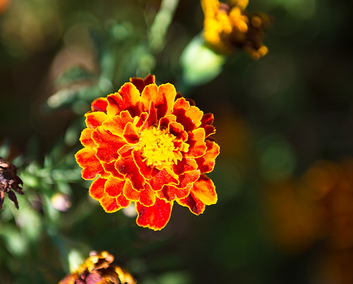 Flower #2 ©  Andrey