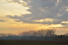 Evening Trees - 2 (- Laura Nicole -) Tags: trees sunset sky nature clouds outdoors spring horizon country fields treeline