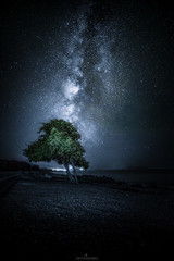 Galactic tree (Oscar Keserci Photography) Tags: nightphotography tree art nature night way stars nikon nightimages greece galaxy milky rodos rhodes nightscapes nikkor1835 nikonflickraward nikond750 oscarkeserci