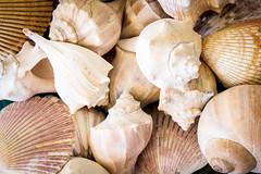 The Ol' Shell Game (ranzino) Tags: vacation shells us newjersey unitedstates nj stoneharbor jerseyshore vacation2015