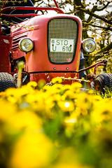 IMG_8726.jpg (vossemer) Tags: de deutschland jahreszeiten natur pflanzen blumen verkehr traktoren frhling blten trecker niedersachsen lwenzahn jork frhjahr