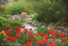 """""""A garden to walk in and immensity to dream in--what more could he ask? A few flowers at his feet and above him the stars."""" - Victor Hugo, Les Miserables (kellykhorne) Tags: painterly gardens tulip tulipfestival thanksgivingpoint topazimpression topaztextureeffects"""