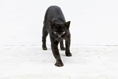 151229 - Forward (y_leong23) Tags: cat dlux