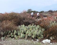 029 The Road Is Taken (saschmitz_earthlink_net) Tags: california road cactus orienteering runner irwindale 2016 losangelescounty santafedam laoc santafedamrecreationarea losangelesorienteeringclub