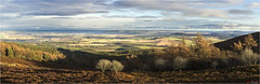 Over the Shire (The Terry Eve Archive) Tags: mountain scotland aberdeenshire heather hill sunlit moorland bennachie pittodrie pittodriehousehotel pittodriehotel