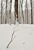 DSC_0052 (Raymond H G) Tags: park trees white snow fall creek forest landscape sticks woods trunks flakes six drifts mile harborcreek
