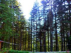 SGRN2015-09_118 (Ayesha Khalid Khan) Tags: pakistan kaghanvalley shogran northernpakistan naturephotography travelphotography pinepark pakistantourism pineparkhotelsresorts