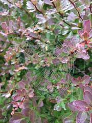 Spider Doo-Dew (MitchcCaldwell) Tags: morning flowers summer spiders spiderweb dew morningdew