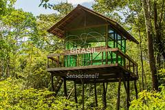 NO_Tefe0081 (Visit Brasil) Tags: travel brazil tourism nature horizontal brasil amazon rainforest natureza norte amazonas ecoturismo ecotourism externa semgente tef diurna riosolimes reservamamirau visitbrasil