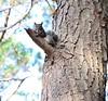 Catch Me If You Can! (MND7000) Tags: nikon squirrel autofocus photographyforrecreation infinitexposure