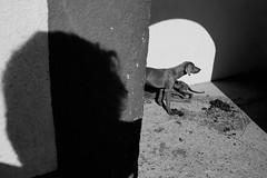 autorretrato (bolano) Tags: white black art blanco luz canon y mark iii 14 negro sigma sombra perro 5d 35