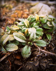 IMG_7057 (Mat_B) Tags: park winter lake plant cold macro green nature photography focus natural state walk january super hills tiny area growing moraine thaw defiance 2016